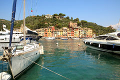 Louro de Portofino. Liguria, Italy. Imagem de Stock