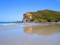 Louro de Tapotupotu, Nova Zelândia Imagem de Stock Royalty Free