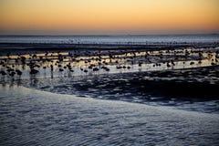 Louro de Walvis, Namíbia fotografia de stock royalty free
