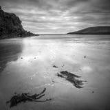 Louro do cabo, Anglesey Imagem de Stock Royalty Free