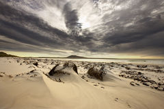 Louro do elefante - console do seixo - Ilhas Falkland imagens de stock royalty free