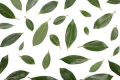 Louro isolado no fundo branco Folhas de louro frescas Vista superior Teste padrão liso da configuração Fotografia de Stock Royalty Free