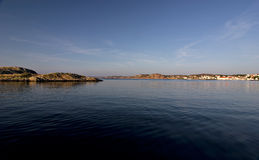 Louro na costa sueco Imagens de Stock Royalty Free