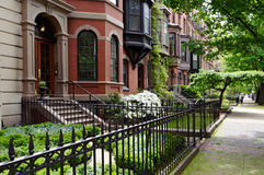 Louro traseiro de Boston imagens de stock royalty free