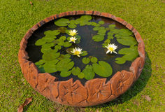 Lotus Basin Royalty Free Stock Image