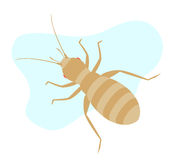 Louse Insect Stock Photos