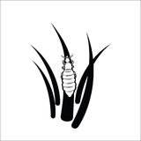 Louse Royalty Free Stock Image