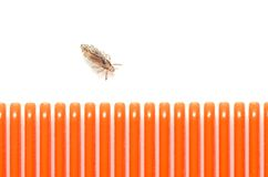 A louse on a white background next to a hairbrush for combing in Royalty Free Stock Photography