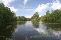 Lousiana swamp Stock Photo