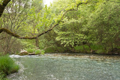 Lousios River, Greece Royalty Free Stock Photography