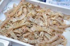Louva-a-deus do Squilla para a venda no mercado de peixes de Catania imagens de stock