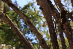 Louva-a-deus em uma árvore Imagem de Stock Royalty Free