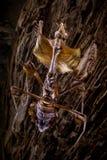 A louva-a-deus escala a casca de uma árvore imagens de stock royalty free