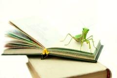 Louva-a-deus verde em um livro velho, fim acima, foco seletivo Mantodea Fotografia de Stock Royalty Free