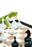 Louva-a-deus verde que joga a xadrez na placa de xadrez, fim acima, selecti Fotografia de Stock Royalty Free