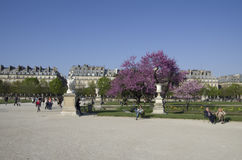 Louvre museum and park des tuileries. Beautiful park des tuileries with many people siting and relaxing in the sun Royalty Free Stock Photos