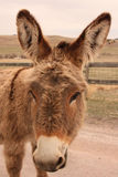 Lovable Burro Royalty Free Stock Images