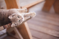 Lovable cat Royalty Free Stock Images