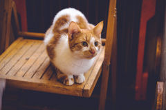 Lovable ginger cat  at home Royalty Free Stock Photography
