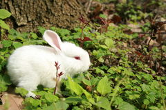 Lovable rabbit Royalty Free Stock Images