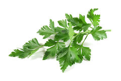 Lovage Stock Photo