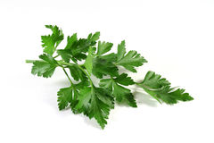 Lovage Royalty Free Stock Photo