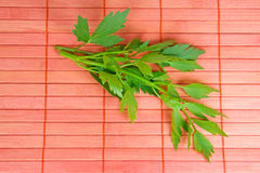 Lovage. Fresh Lovage on red background Stock Images