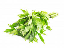 Lovage Herb Royalty Free Stock Photography