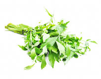 Lovage Herb Royalty Free Stock Images