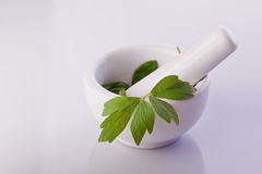 Lovage herb in a mortar Stock Images