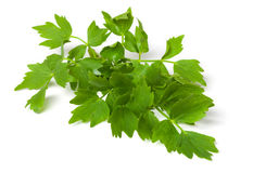 Lovage stock image