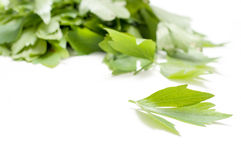 Lovage leaf Stock Images