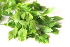 Lovage plant Royalty Free Stock Photography