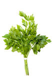 Lovage plant. Isolated on white Royalty Free Stock Photography