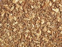 Lovage - raizes secadas Foto de Stock Royalty Free