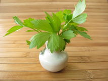 Lovage in vase Royalty Free Stock Photos