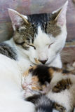 Love. The kittens were born on the third day and the cat Royalty Free Stock Images