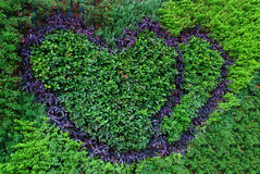 Love. Shapes formed with different colors of plants stock images