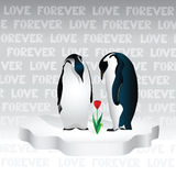 About  love. A couple of penguins are looking at a flower that grew out of the warmth of their love Royalty Free Stock Image