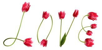Love. Title Love from beauteous pink tulips Stock Photography