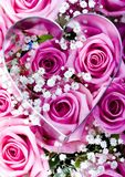 Love. Rose (Rosa), a kind of flower which belongs to the rose-like family, includes over 200 species (according to some researchers up to a few thousands) bushes stock photos
