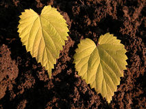 Love. Leaf's heart Royalty Free Stock Image