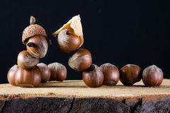 Love among acorns Royalty Free Stock Photography