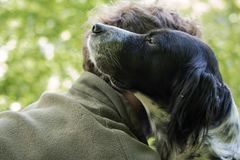 Love and affection between man and his dog. In the woods Stock Images