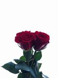 Love is all around. Red roses that I take on Valentine& x27;s day Royalty Free Stock Image