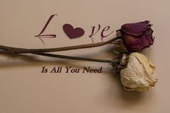Love is all you need Stock Image