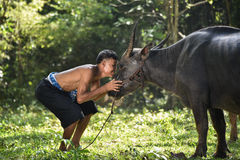 Love animal. Man love animal buffalo Asia Royalty Free Stock Images