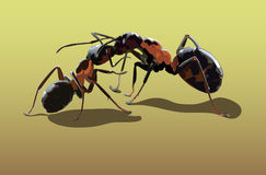Love of ants. Two ants kissing on the yellow sand Royalty Free Stock Images