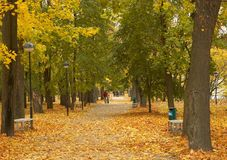 Love and autumn. Couples walking in the park in the autumn Royalty Free Stock Images
