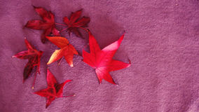 Love Autumn Conceptual Background. Red Leaves Group decor for Nature healthy Concepts Royalty Free Stock Photography
